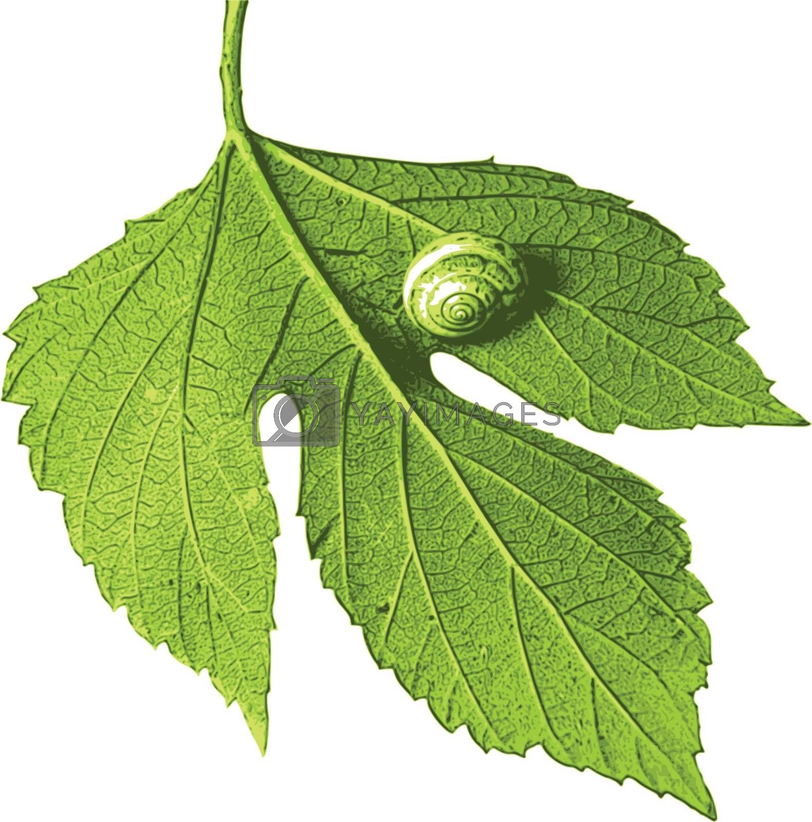 photorealistic, vector, traced illustration of leaf with snail