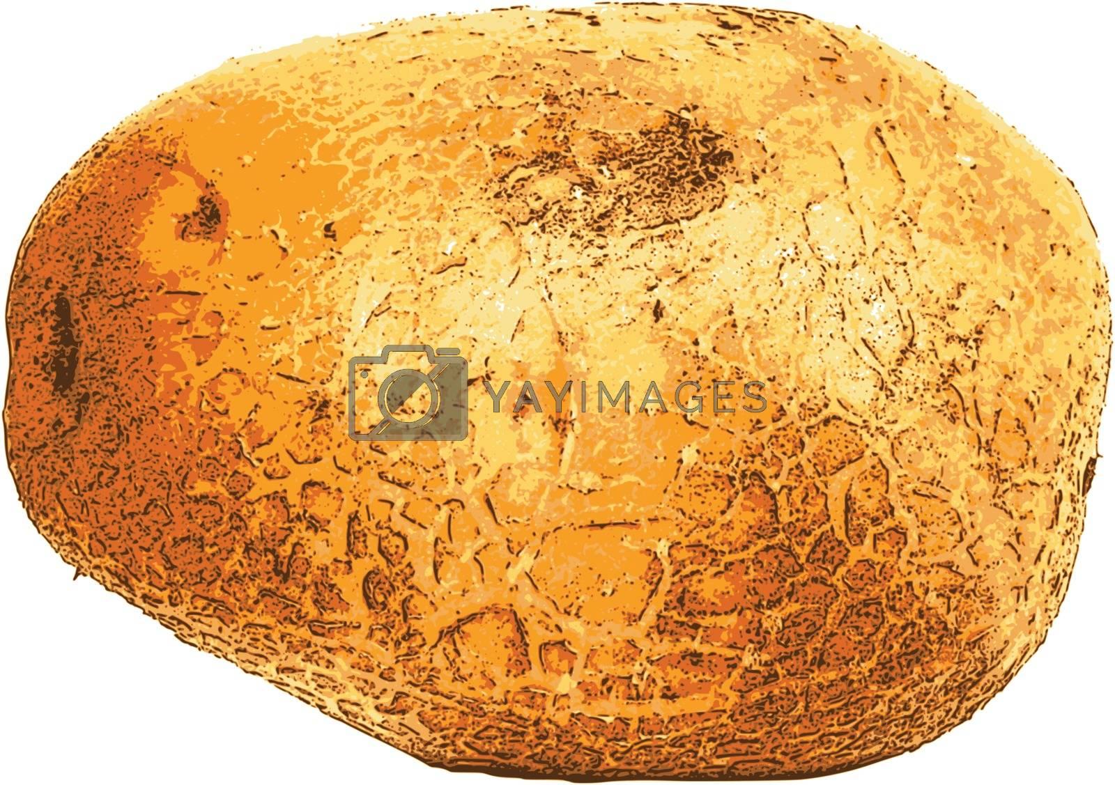 photorealistic, vector, traced illustration of potato