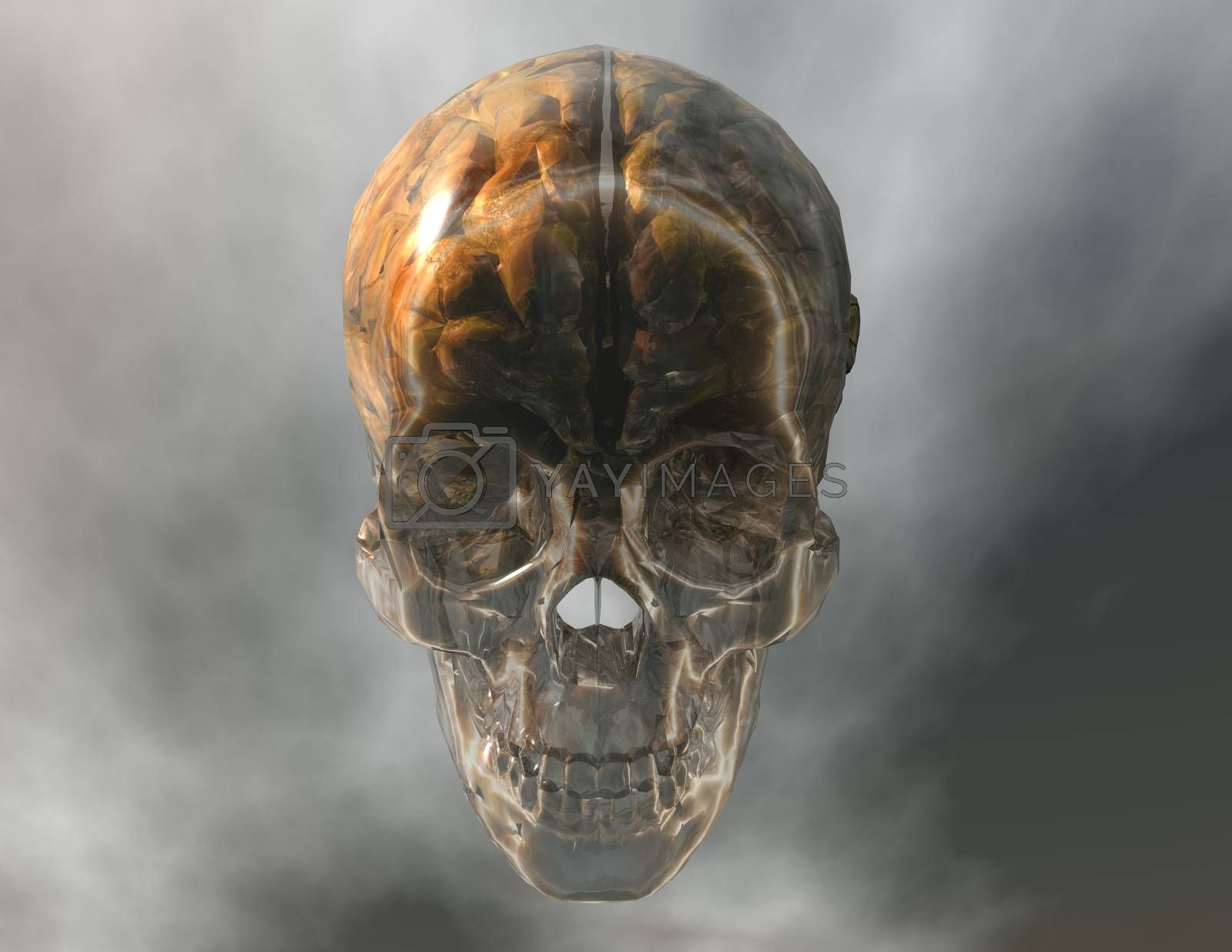 digital visualization of a crystal skull with brain