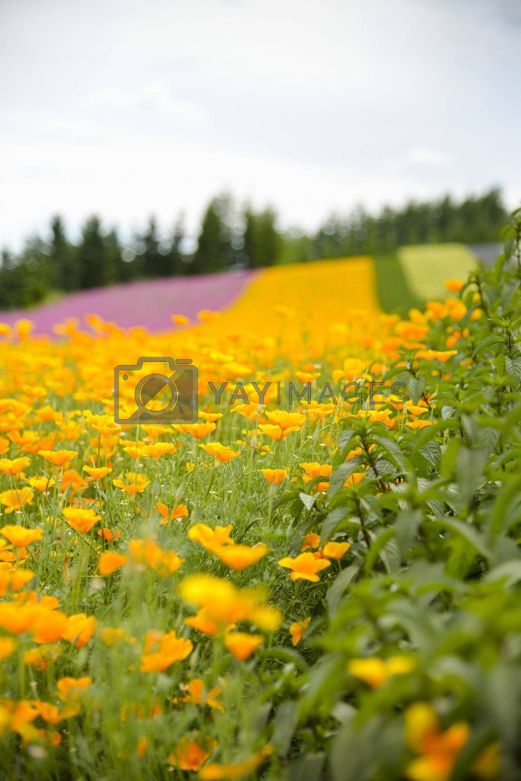 Herb and colurful flower garden3 by gjeerawut