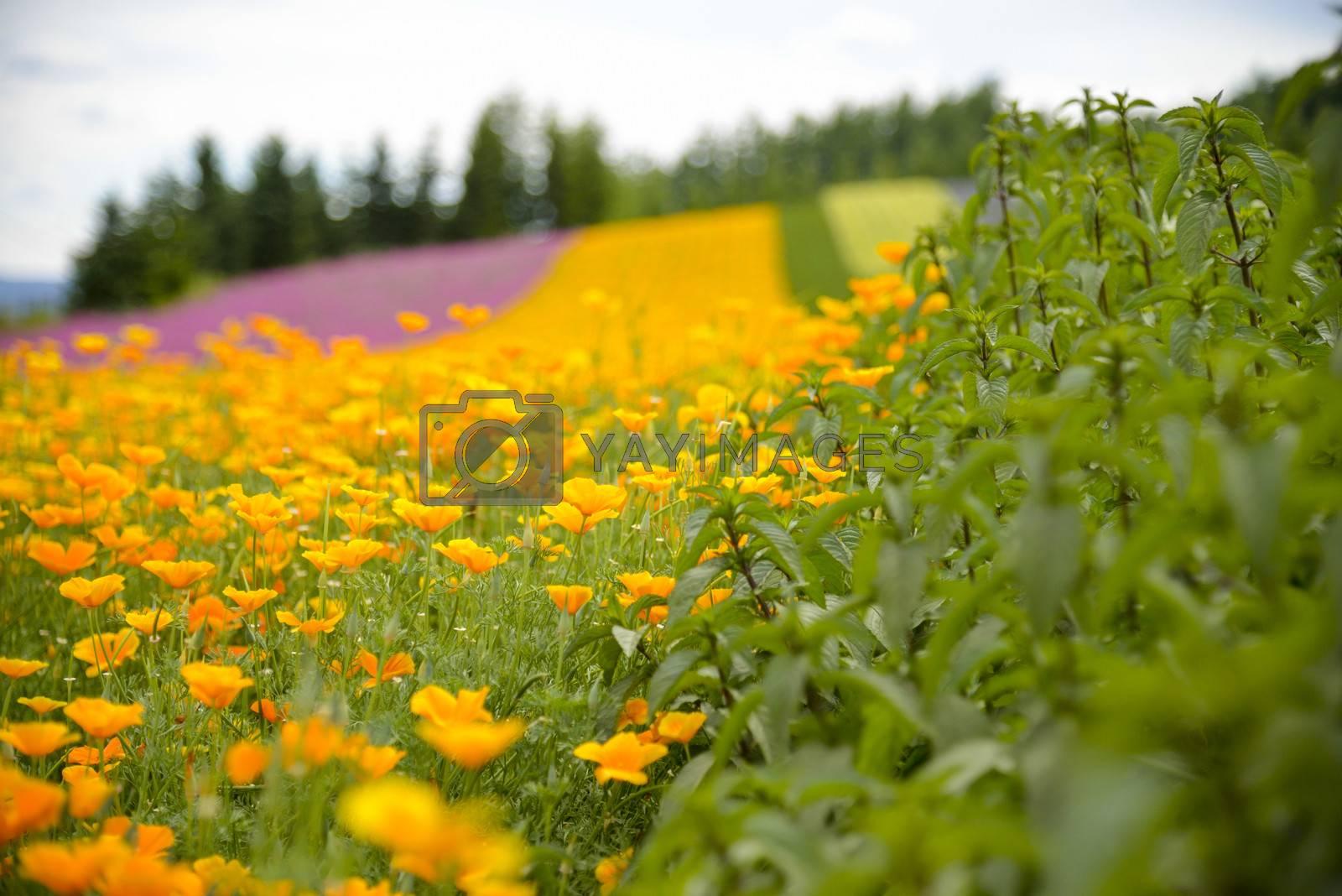 Herb and colurful flower garden4 by gjeerawut