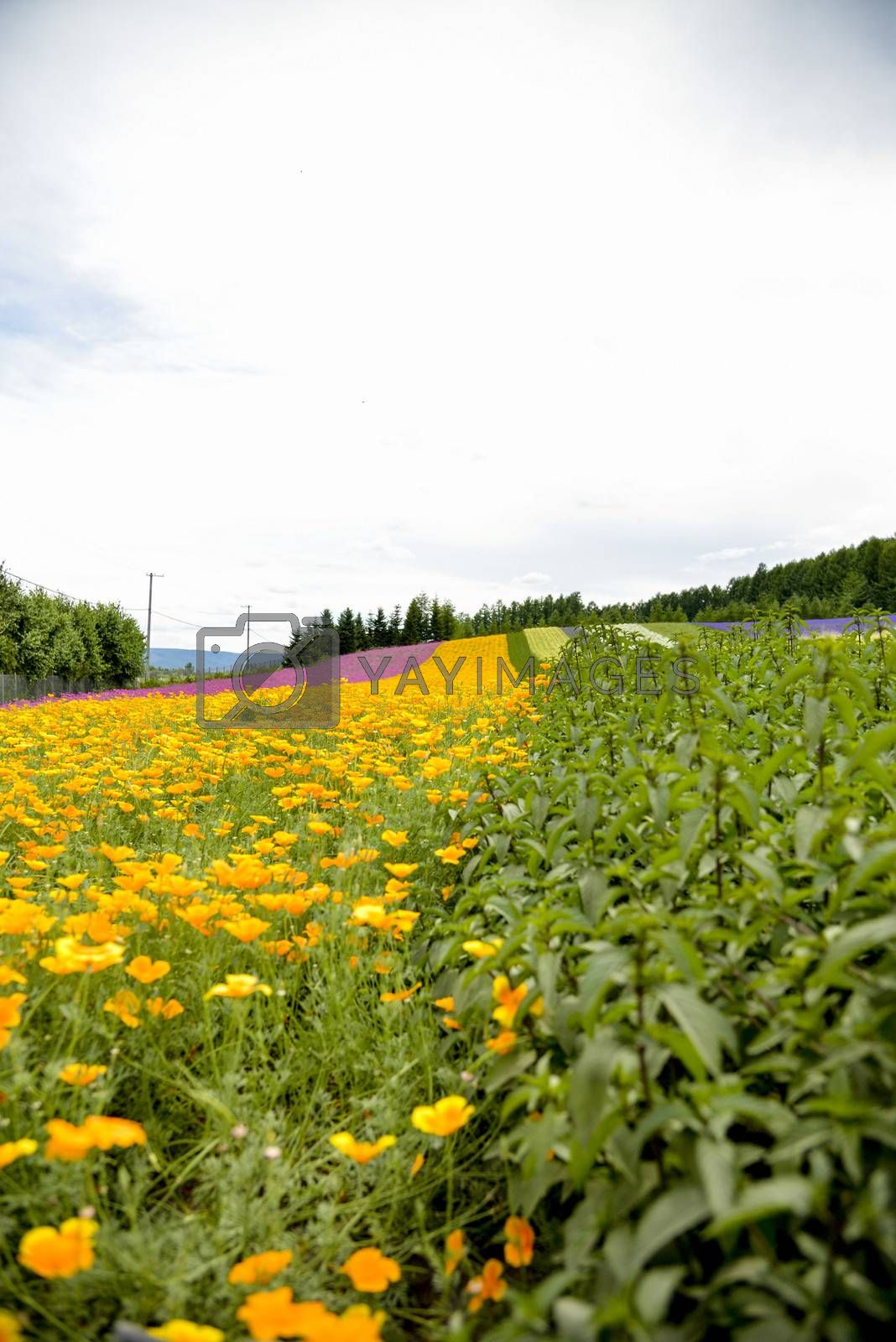 Herb and colurful flower garden2 by gjeerawut