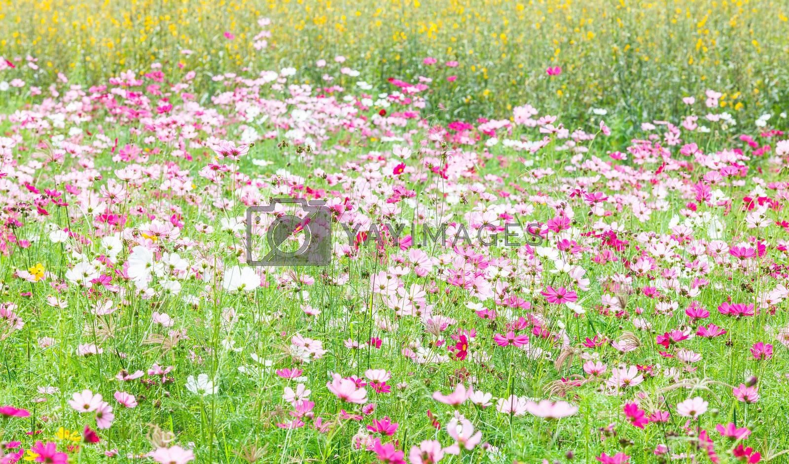 beautiful flowers in the meadow