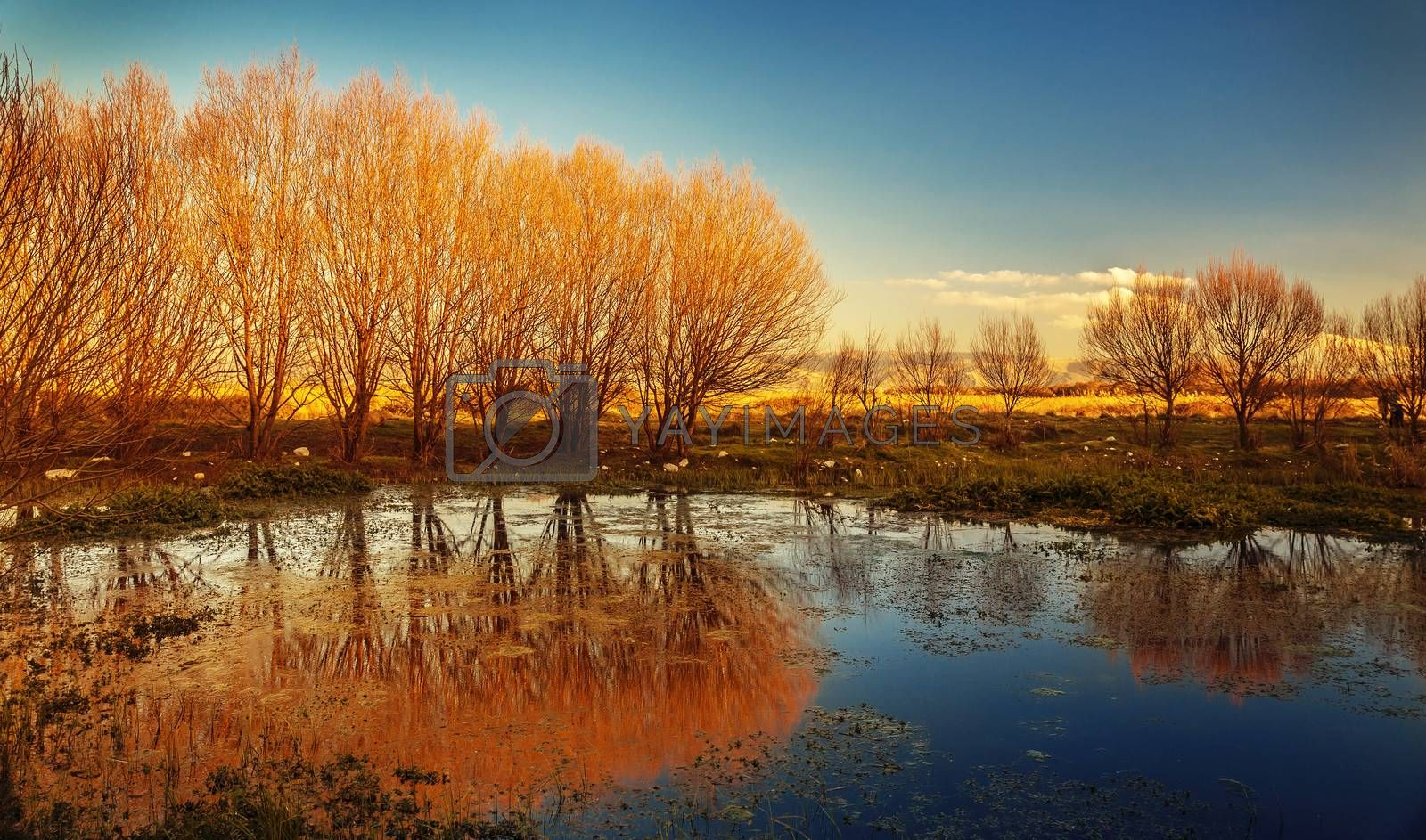 Beautiful autumn landscape, dry trees, blue sky, tree reflected in lake, seasons change, sunny day, autumnal park, fall nature