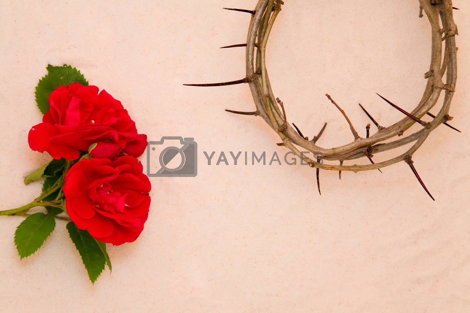 Crown of Thorns and red rose on sand background