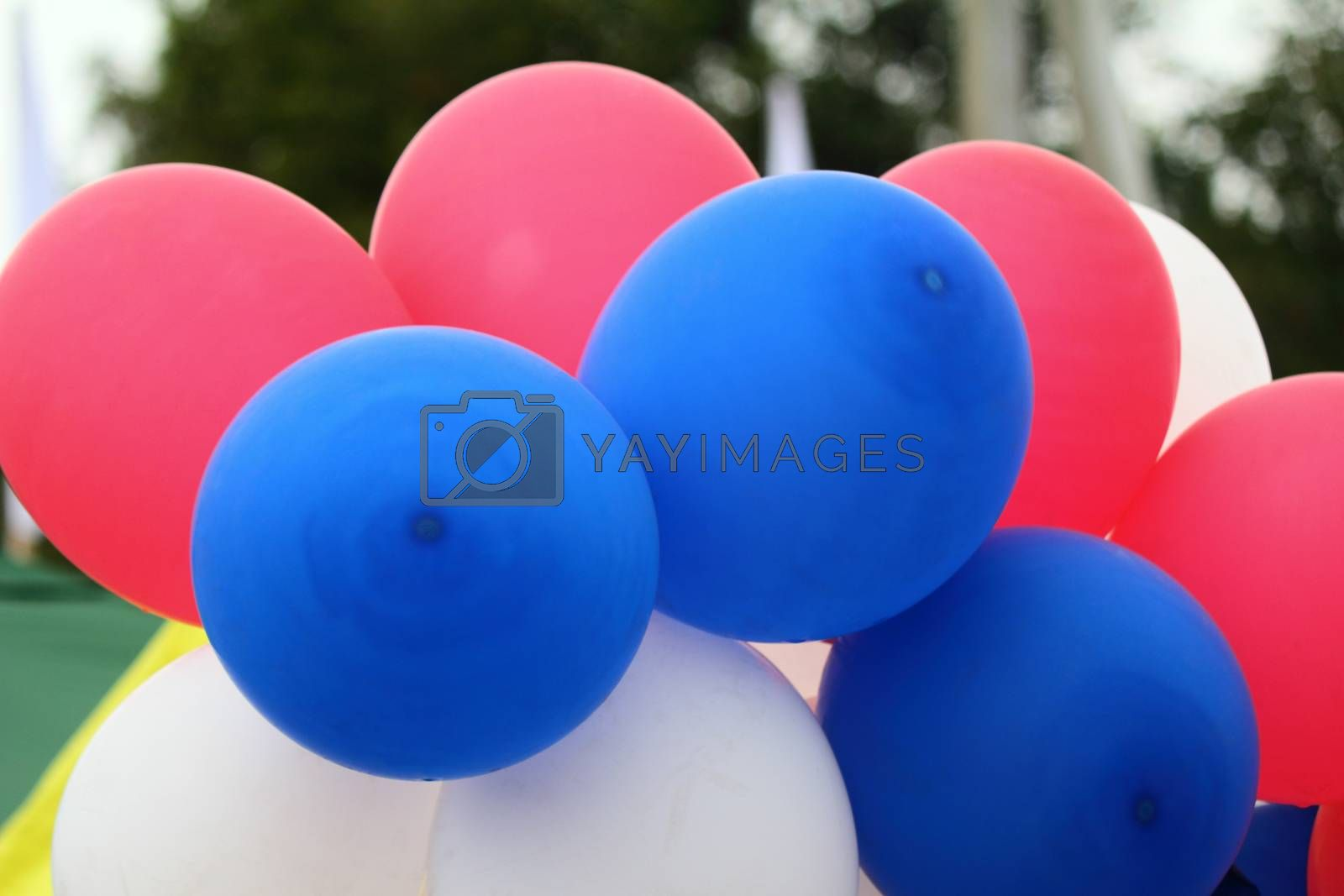 Beautiful, bright, red and blue air balloons, filled with gas and tied together.