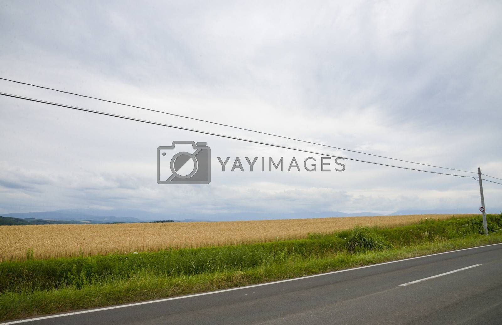Barley field with cloudy sky3
