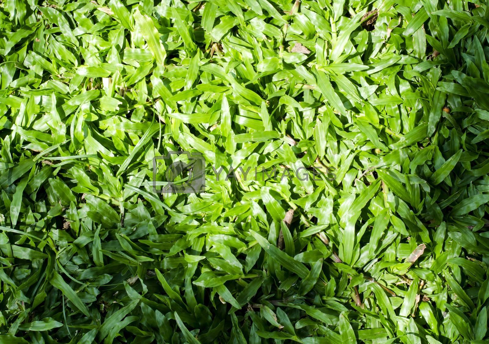shadow on green grass background by Nisakorn Neera