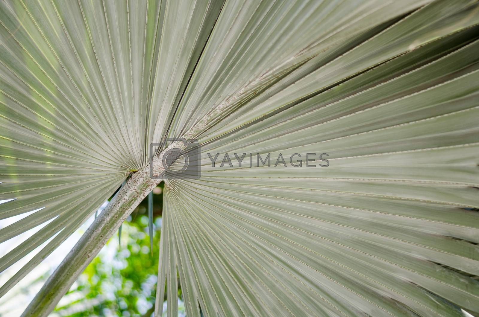 soft green Leaves texture background