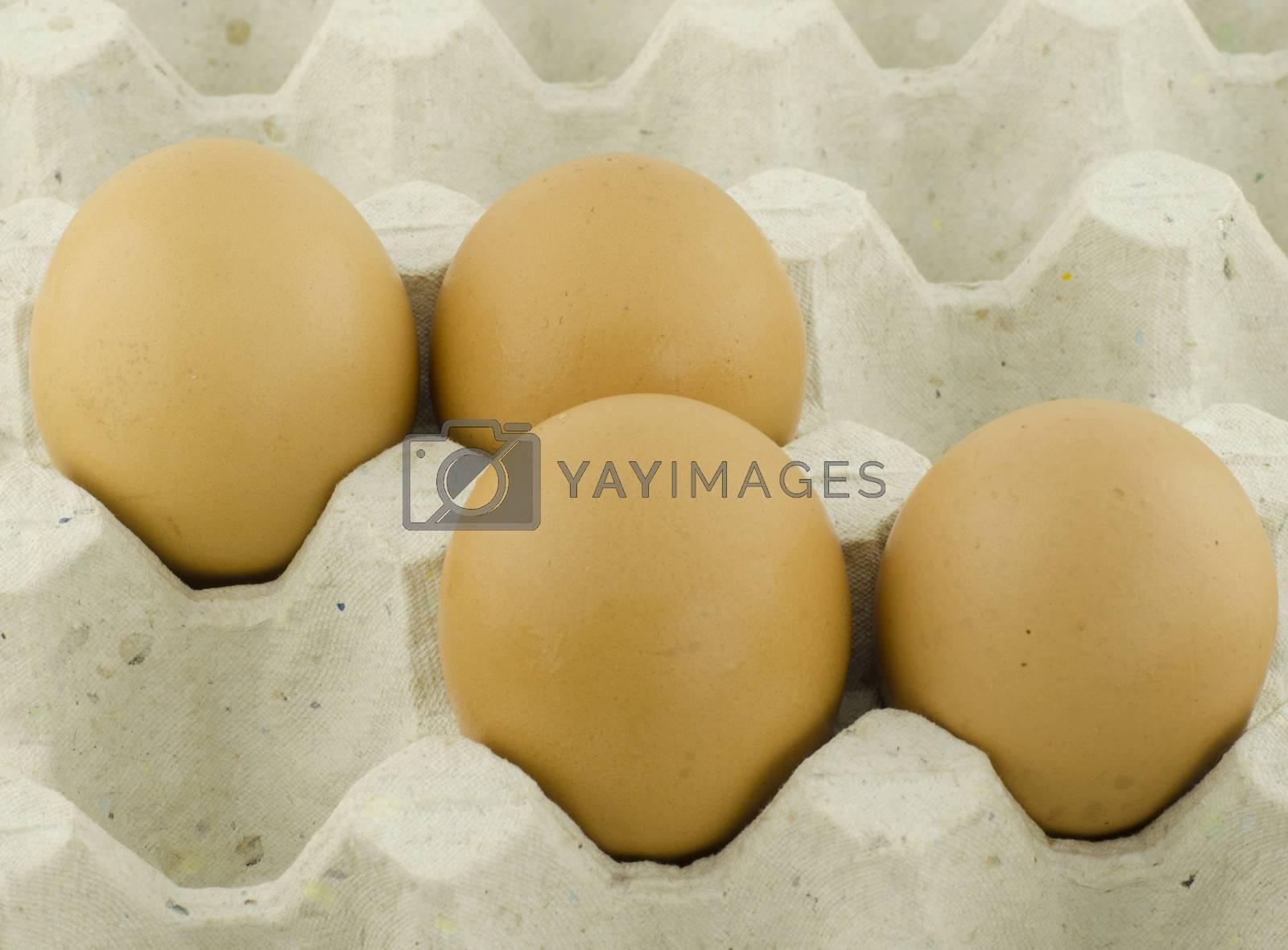 chicken egg in panel eggs