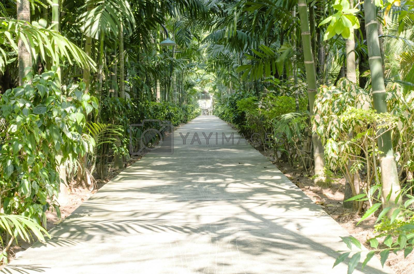 nature Passage with many variety trees