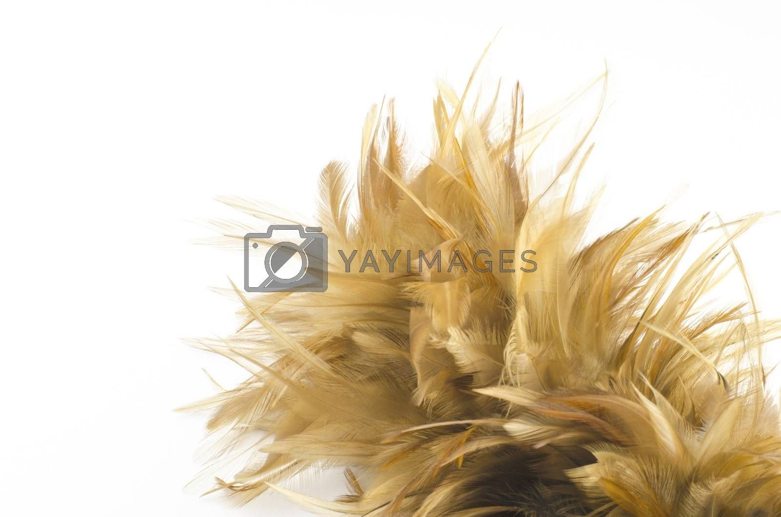 Feather broom isolated on white background