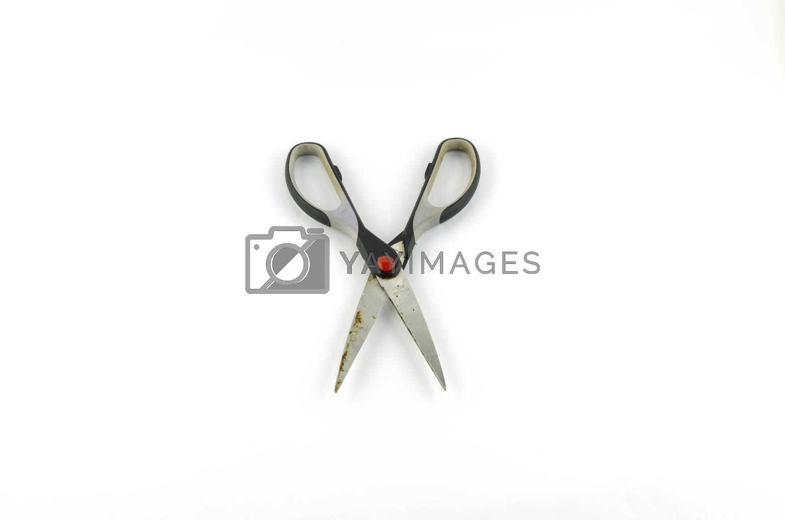 Scissors isolated on white background