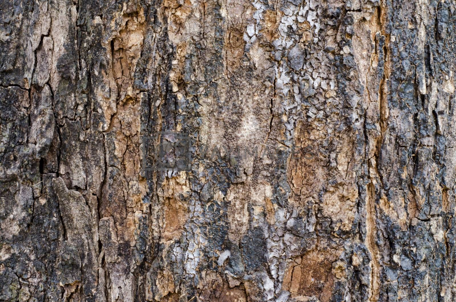 Bark wood texture and background