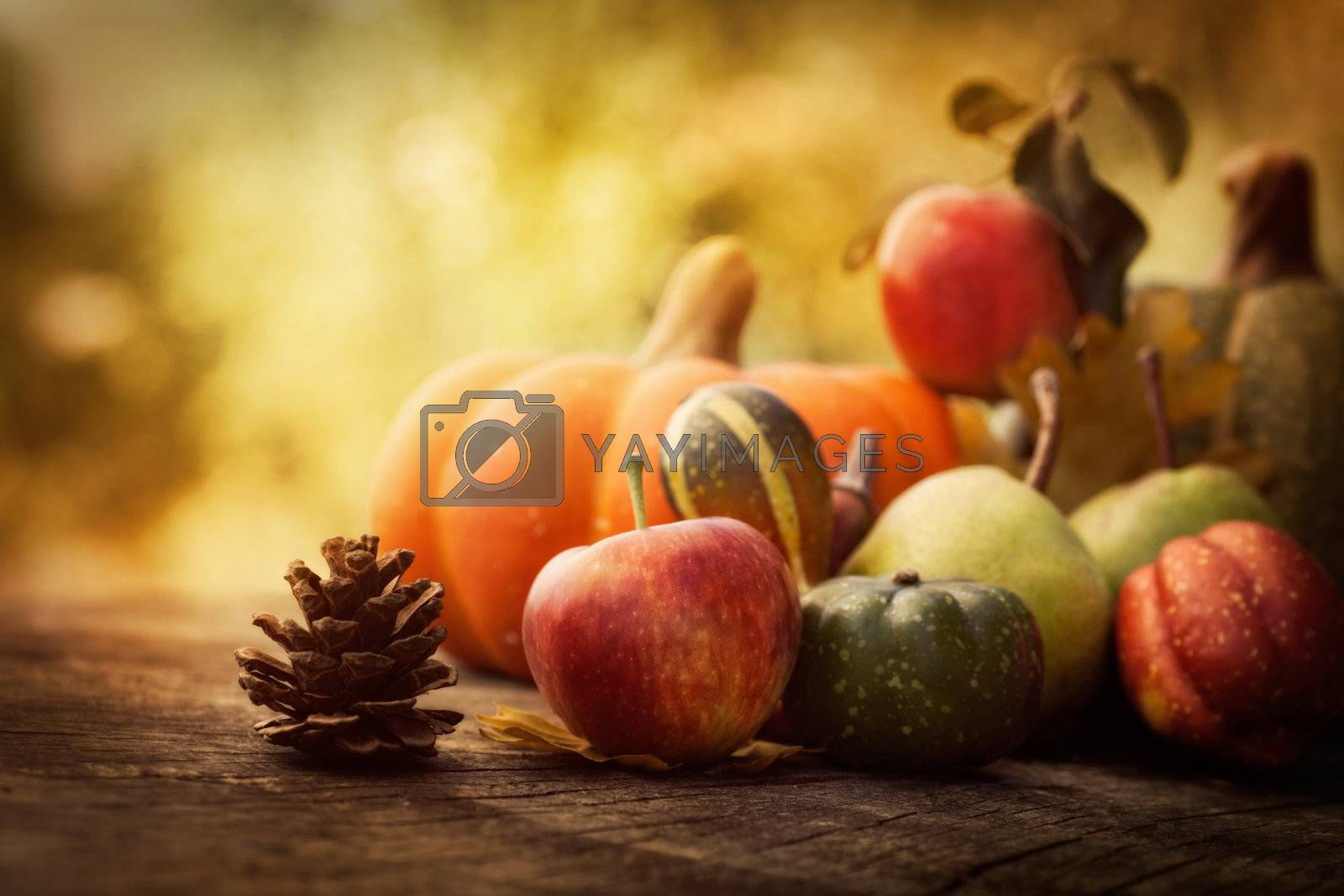 Autumn nature concept. Fall fruit on wood
