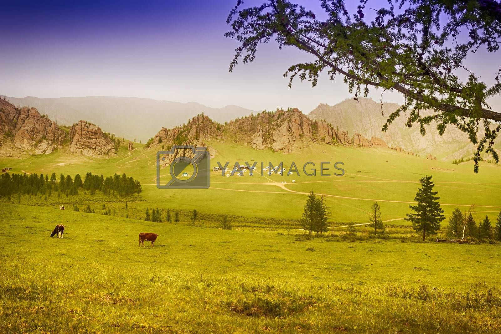 Yourt Camp in Terelj National Park Mongolia with green meadows and animals
