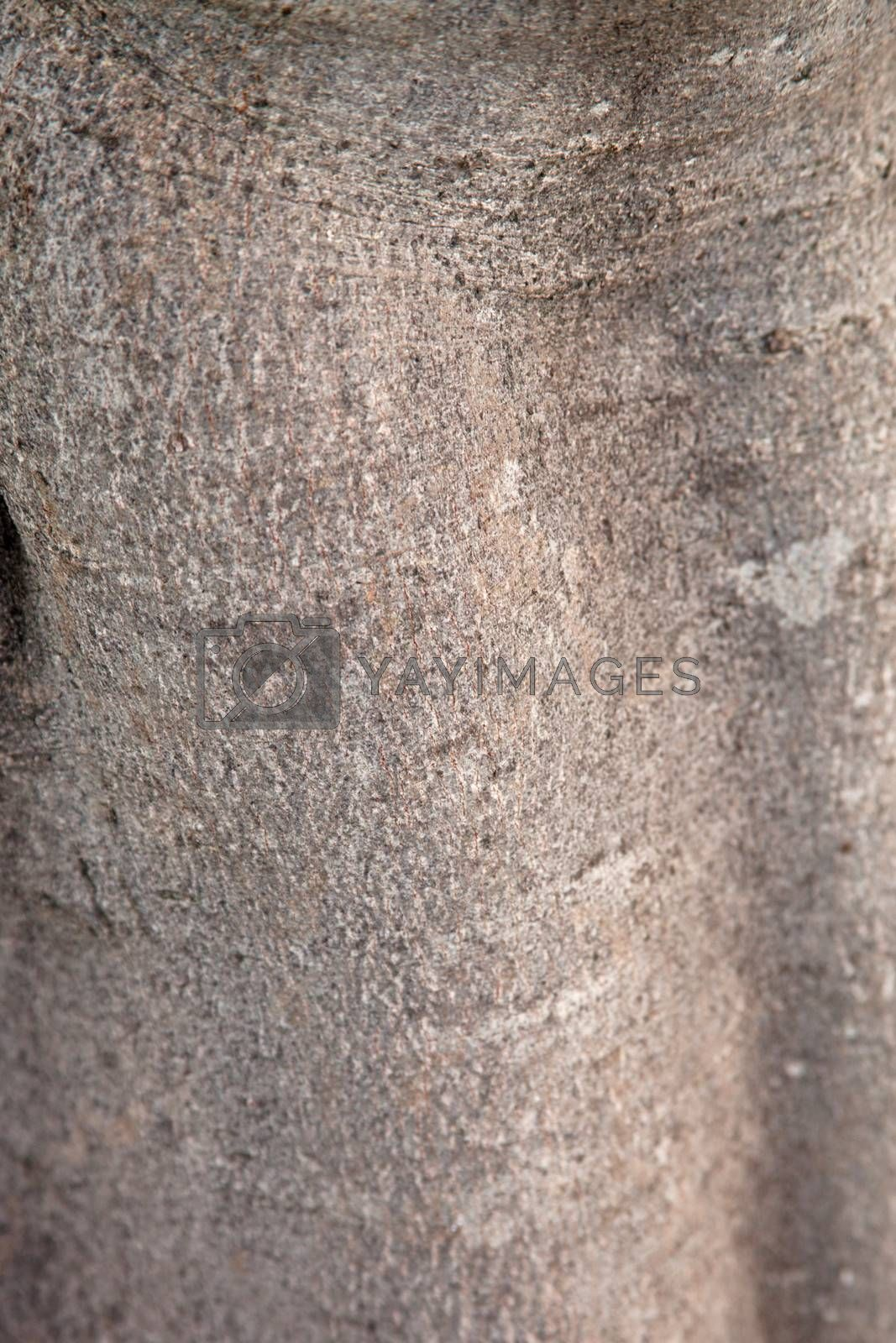 fig tree texture background pattern