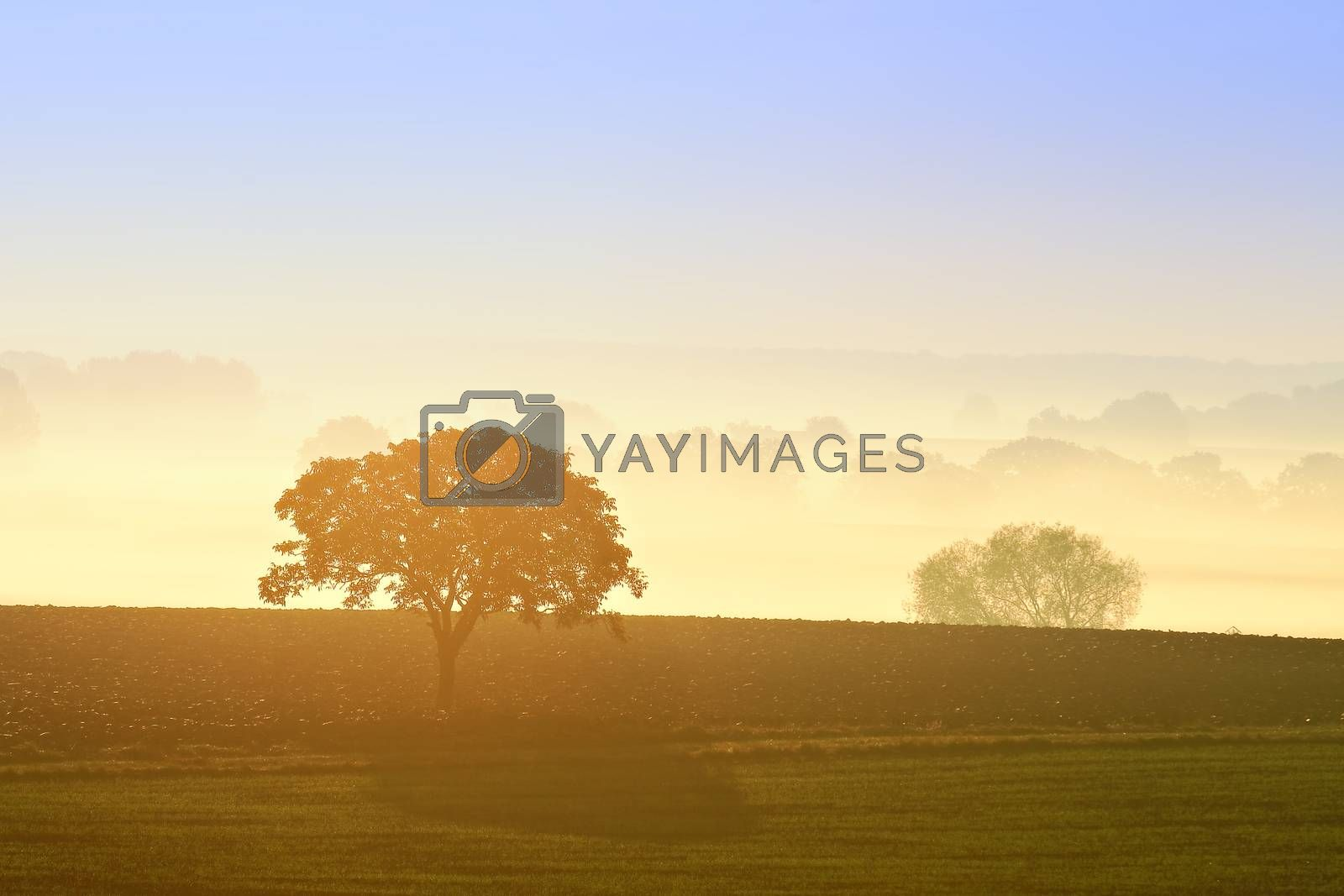countryside landscape early in the morning