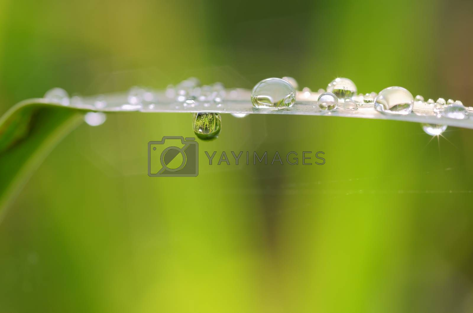 a leaf coverd with drop
