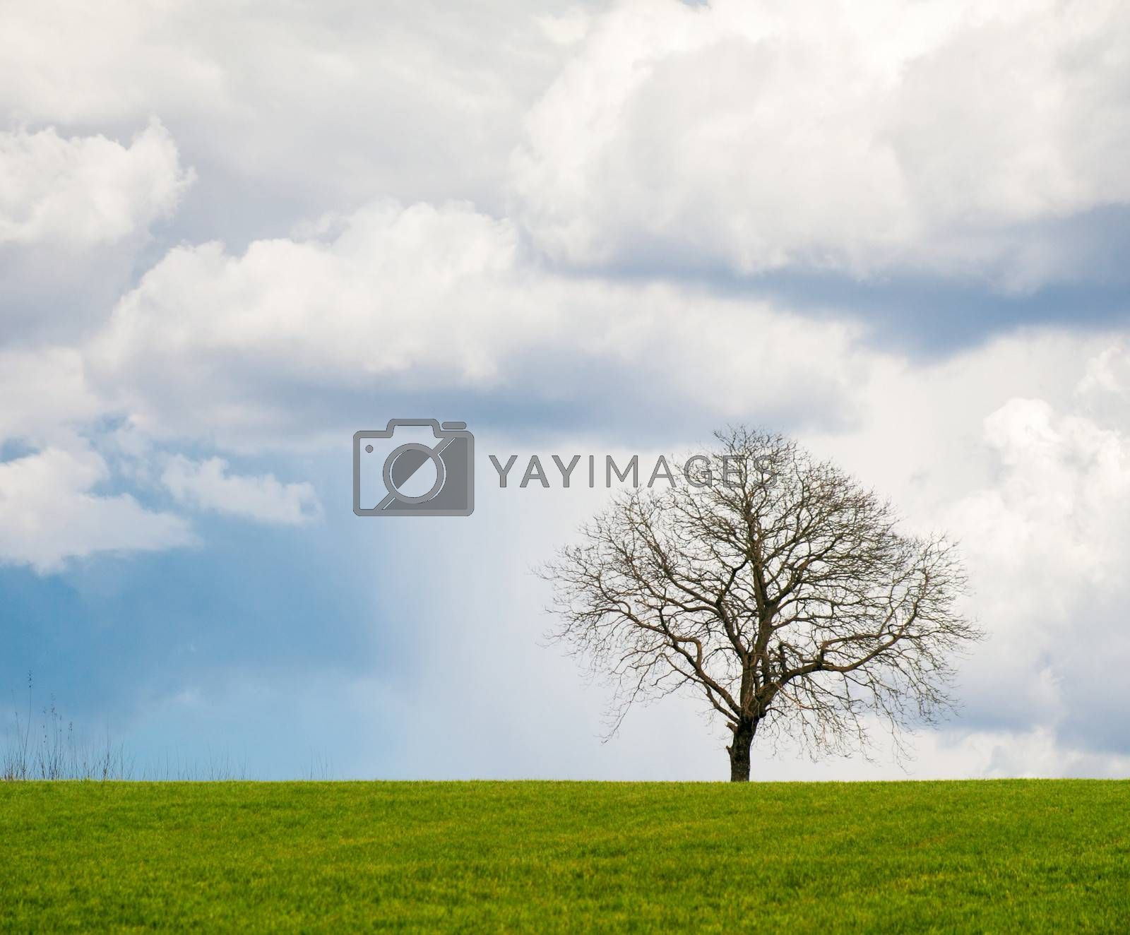 Lonely leafless tree on grass field with cloudy sky.