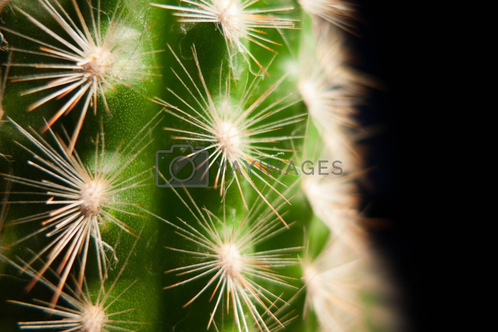 very nice home cactus on black background