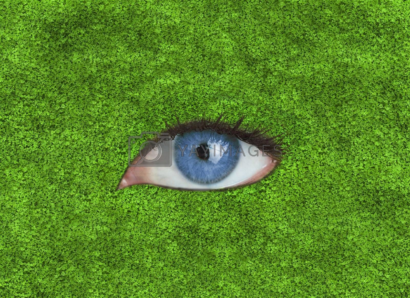 Blue eye in the middle of grass texture