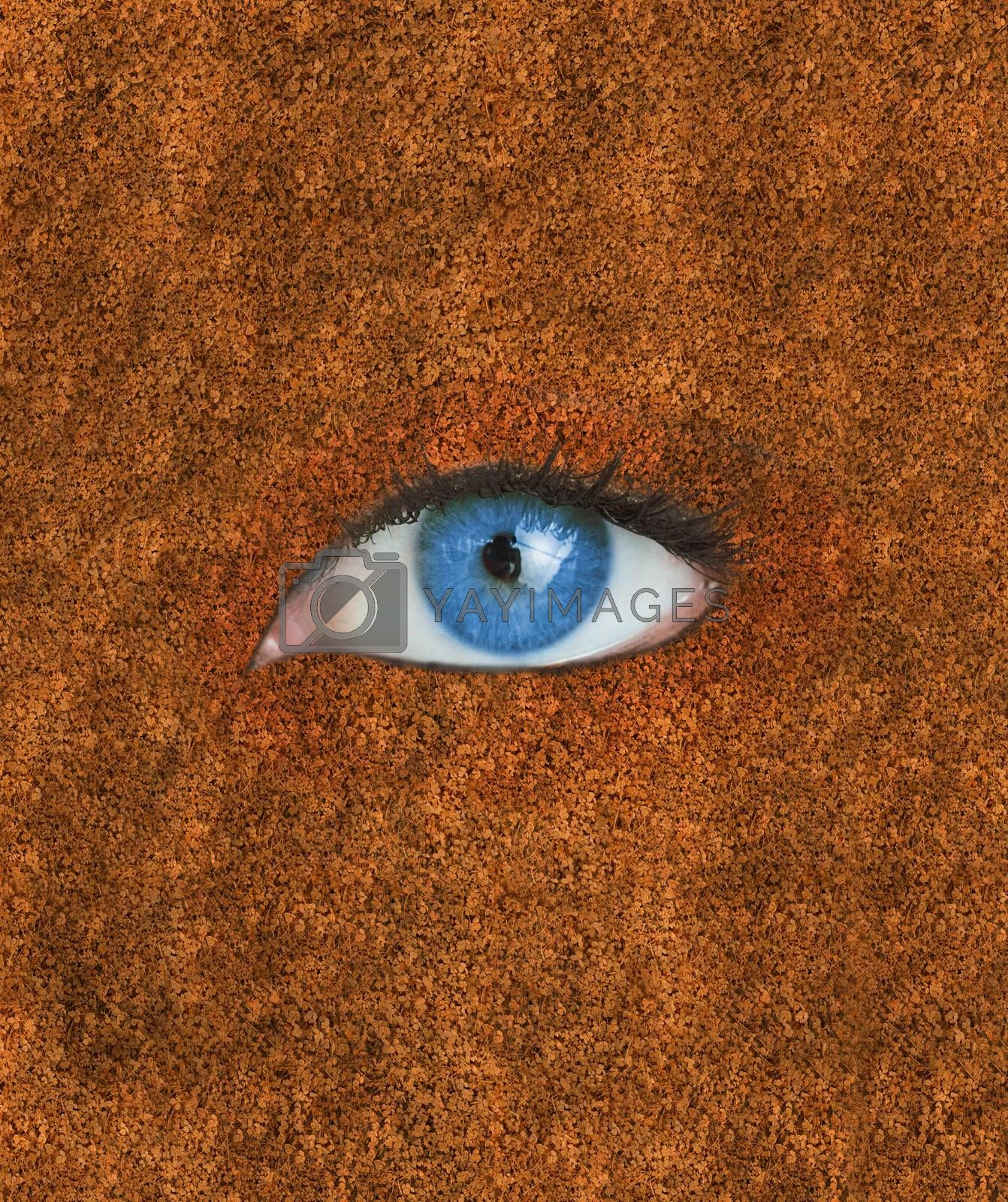 Blue eye over brown autumnal texture