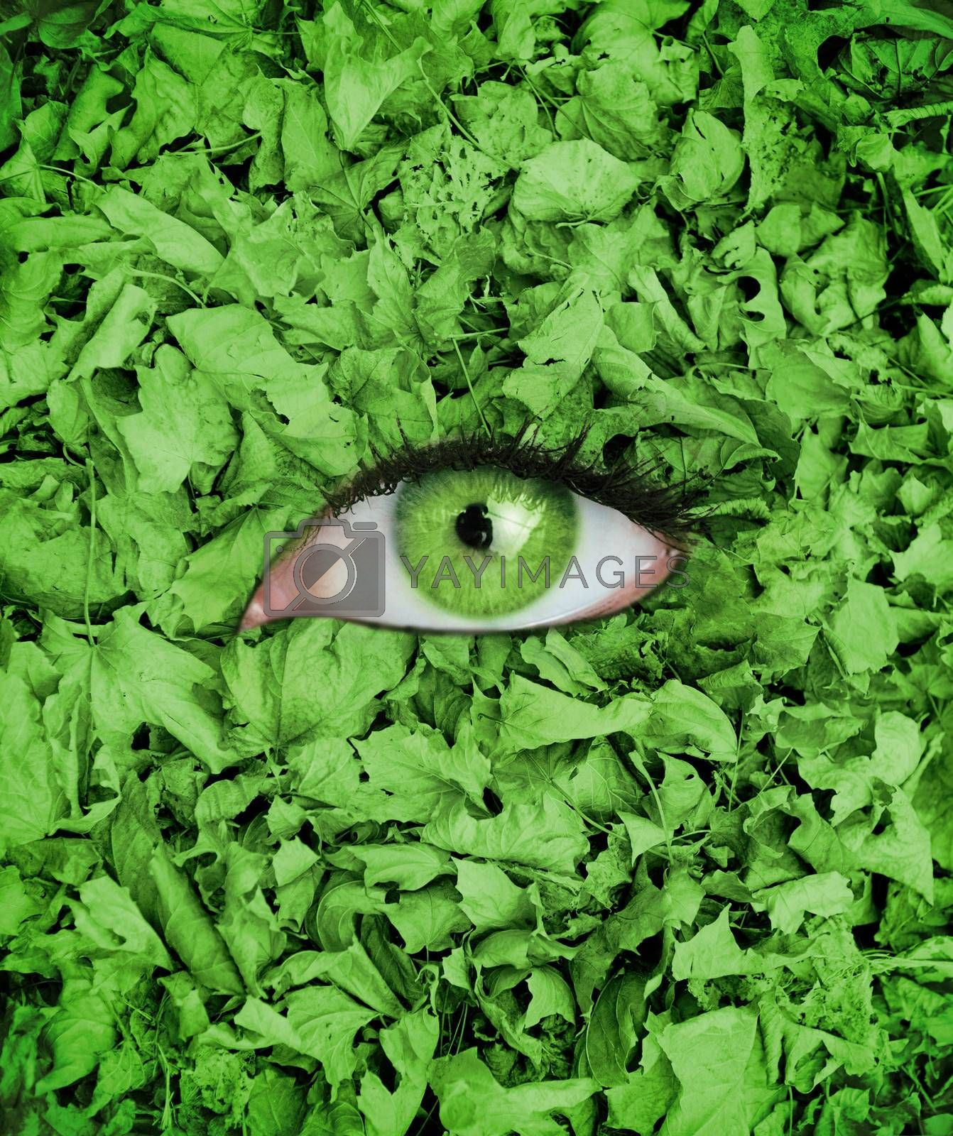 Green eye in the middle of green leaves