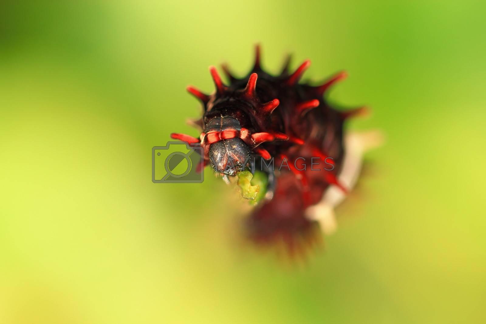 One step of caterpillar life