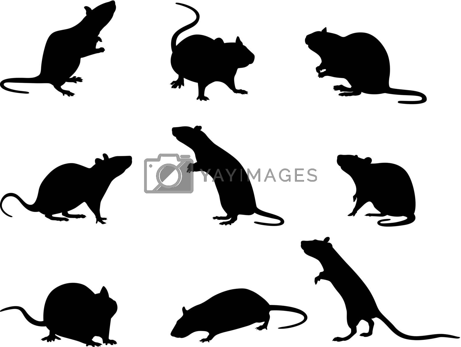 Vector illustration of silhouettes of domestic rats