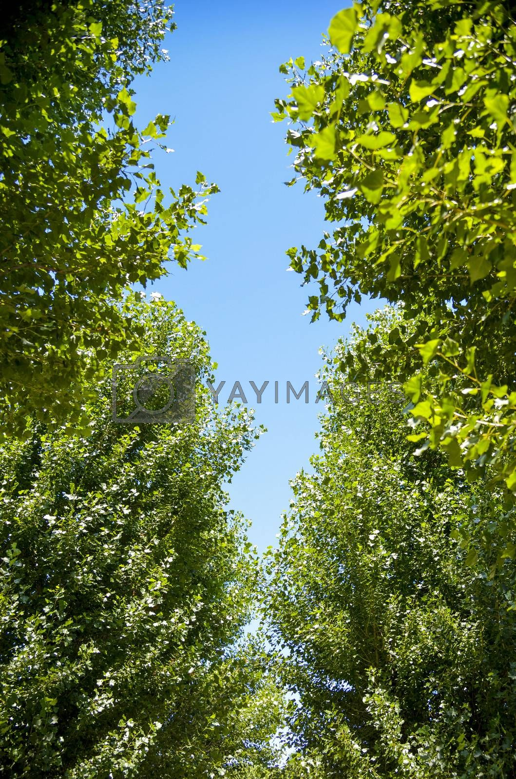 Green trees with sunshine1