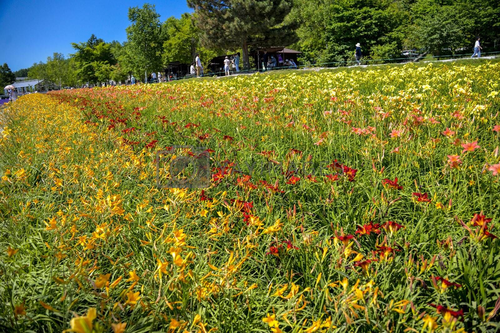 Row of colorful flowers with sunshine4