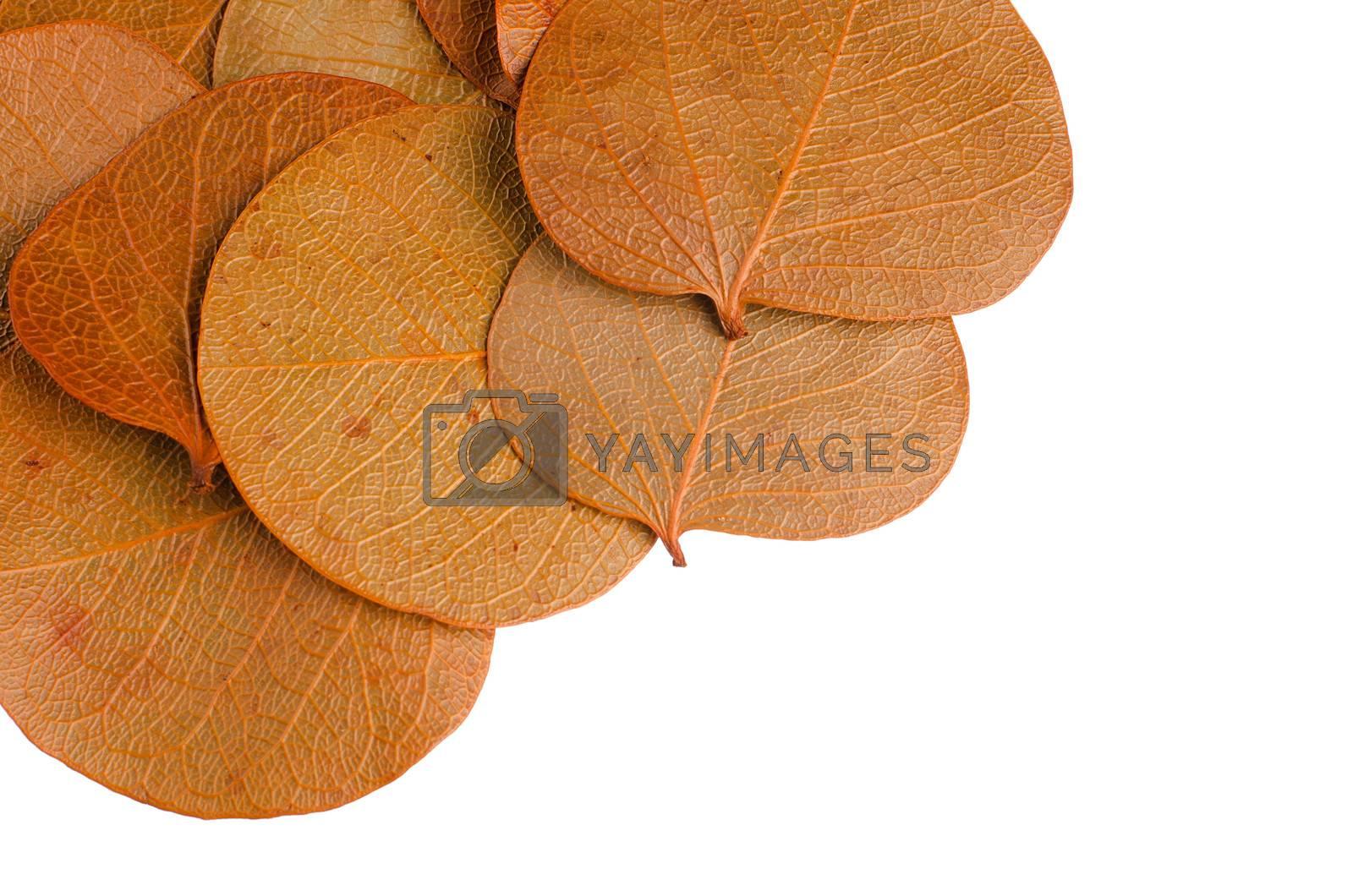 Autumn leaves border on horizontal white background.
