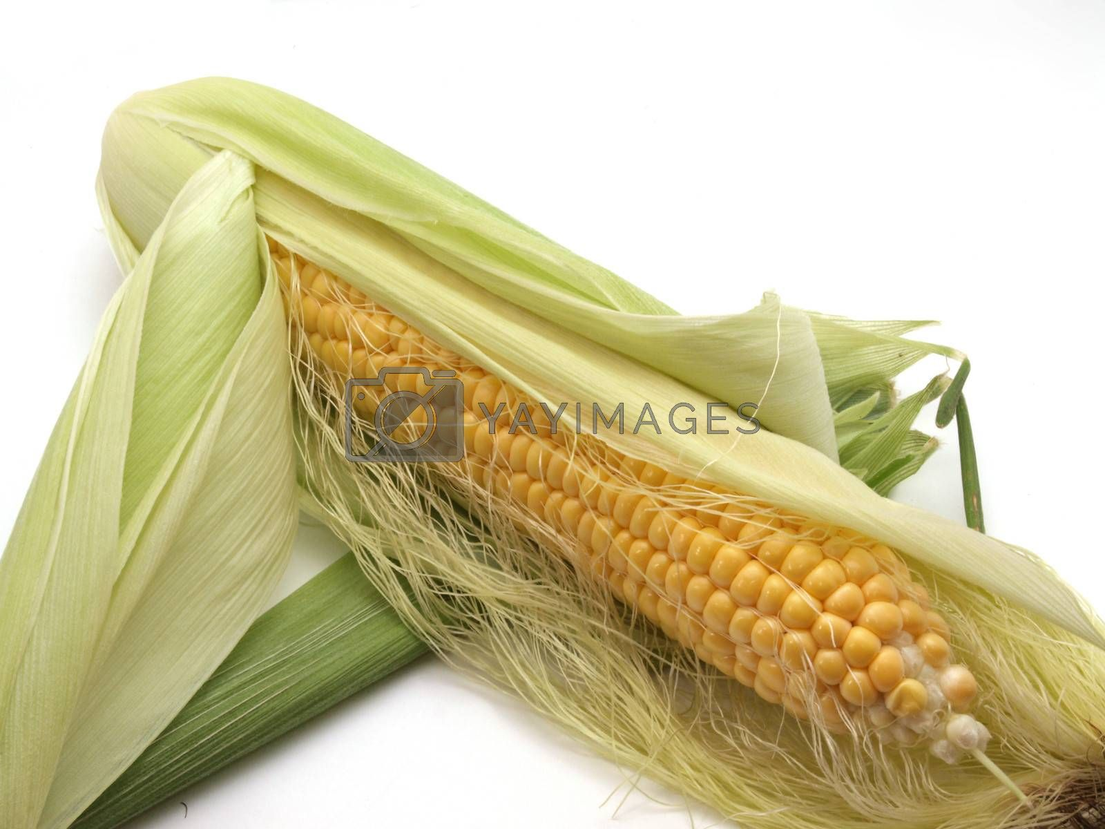 Freshly cut organic sweet corn.