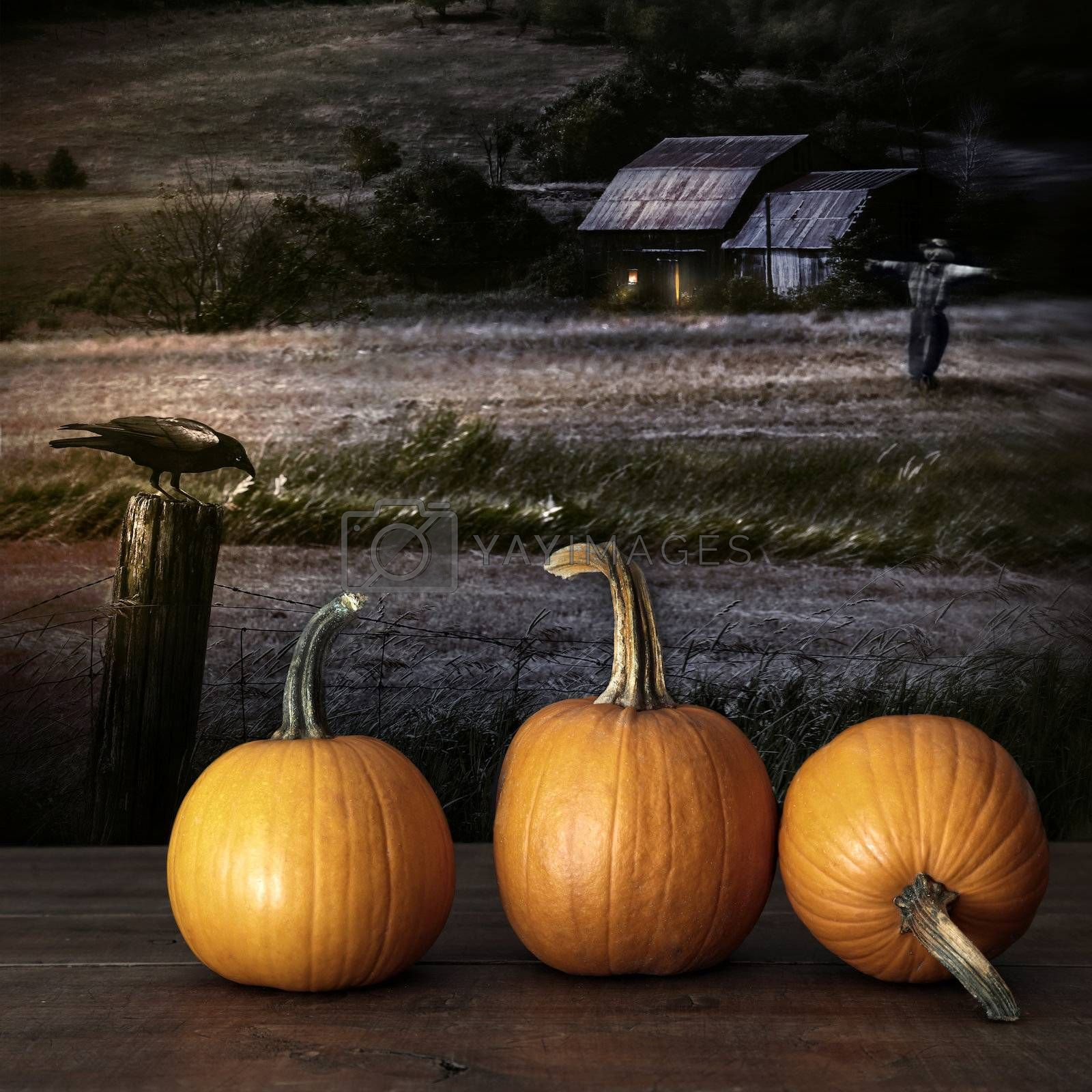 Pumpkins left on table at night