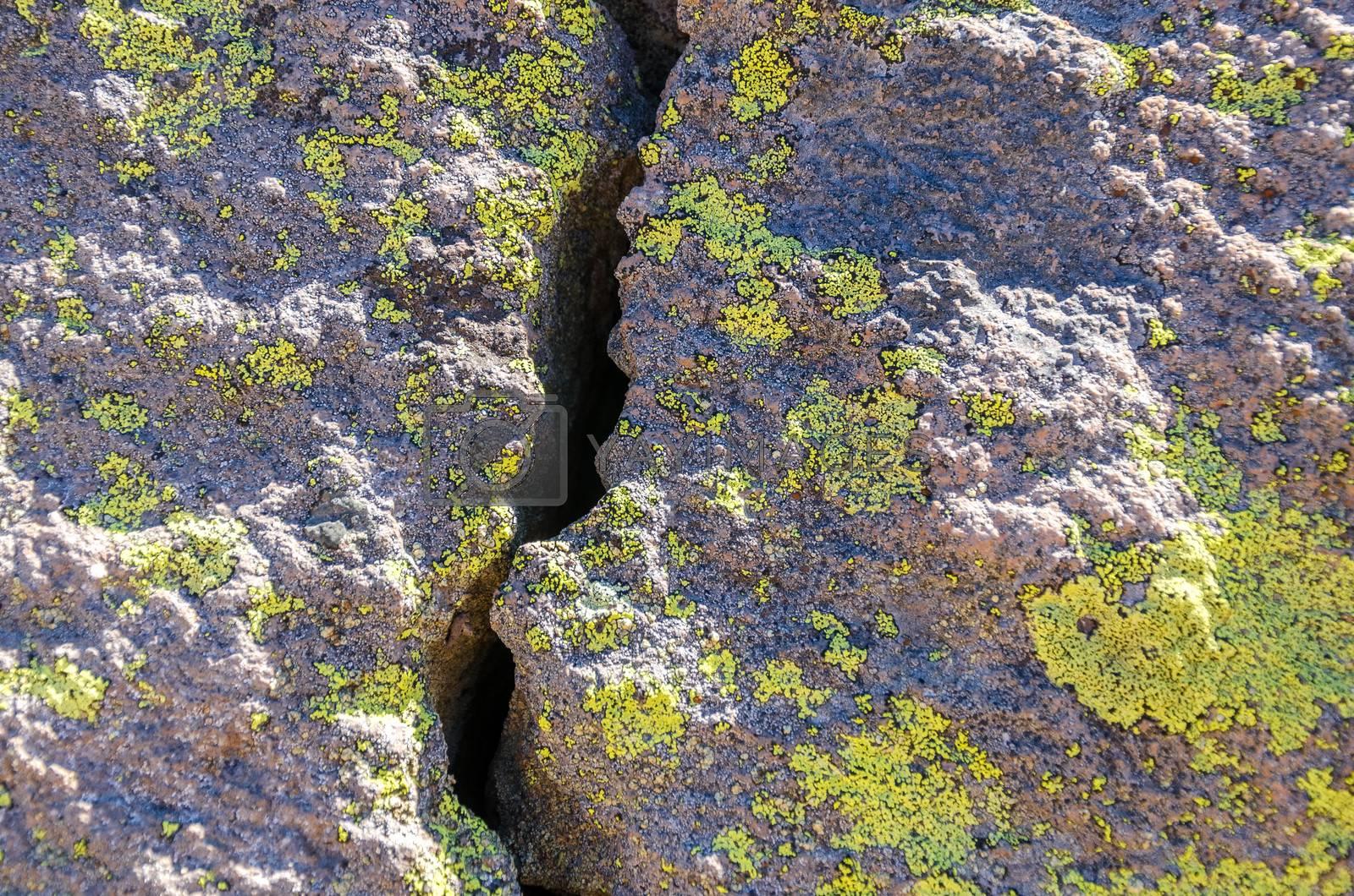 A boulder split in half and covered in greenish lichen