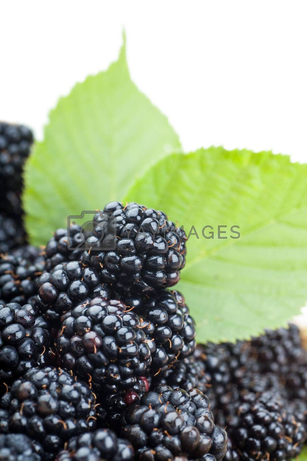 Macro view of fresh ripe blackberries