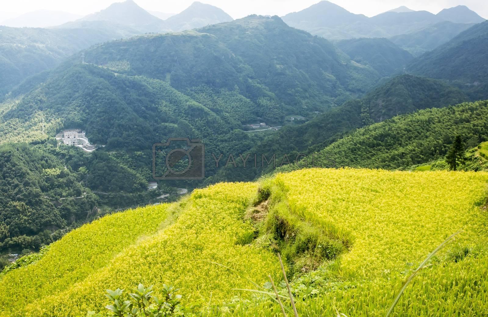 Shooting in China Zhejiang Wenzhou Zeya