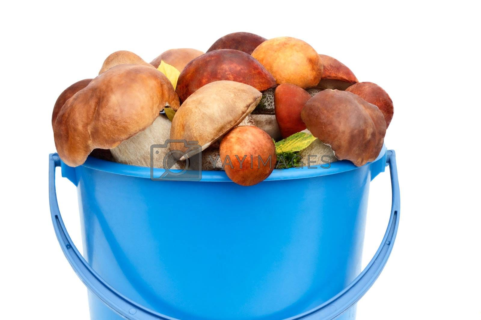 Mushrooms of different varieties are in the blue bucket. Presented on a white background.