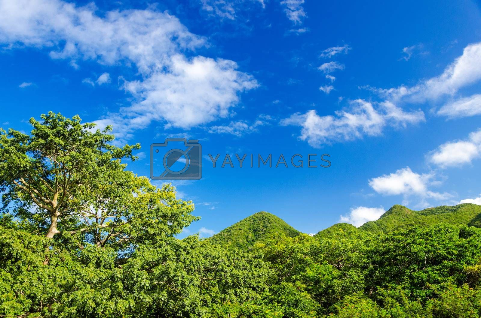 Lush green forest covered hills in San Andres y Providencia in Colombia