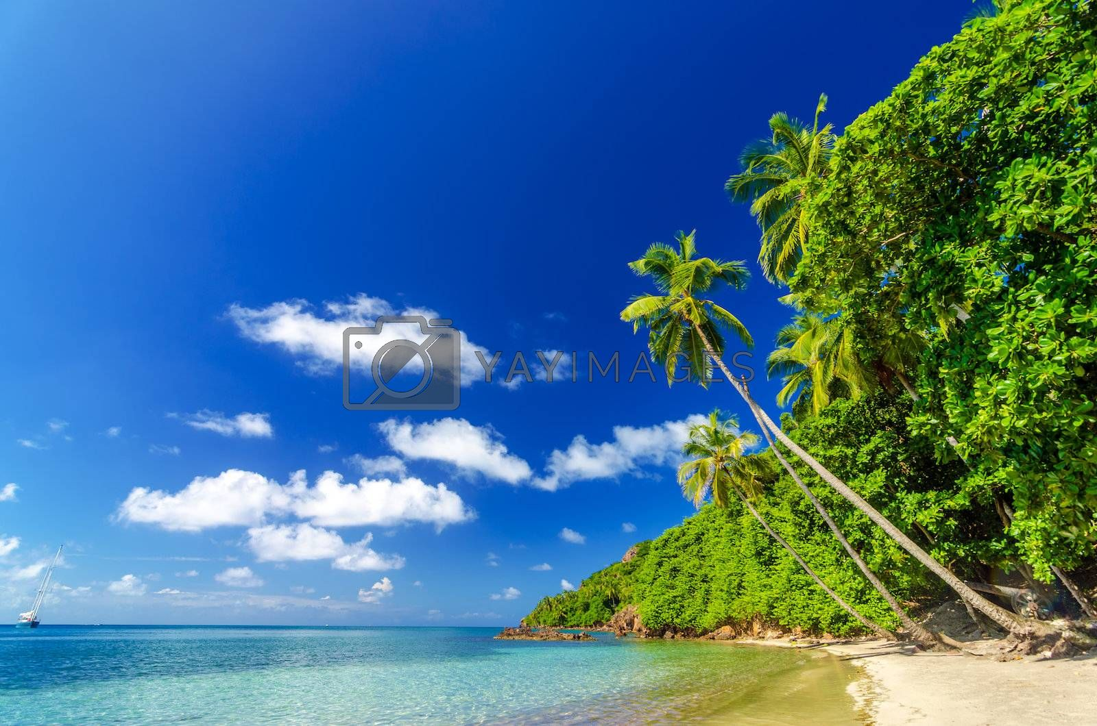Tropical white sand beach and turquoise water in Caribbean Sea
