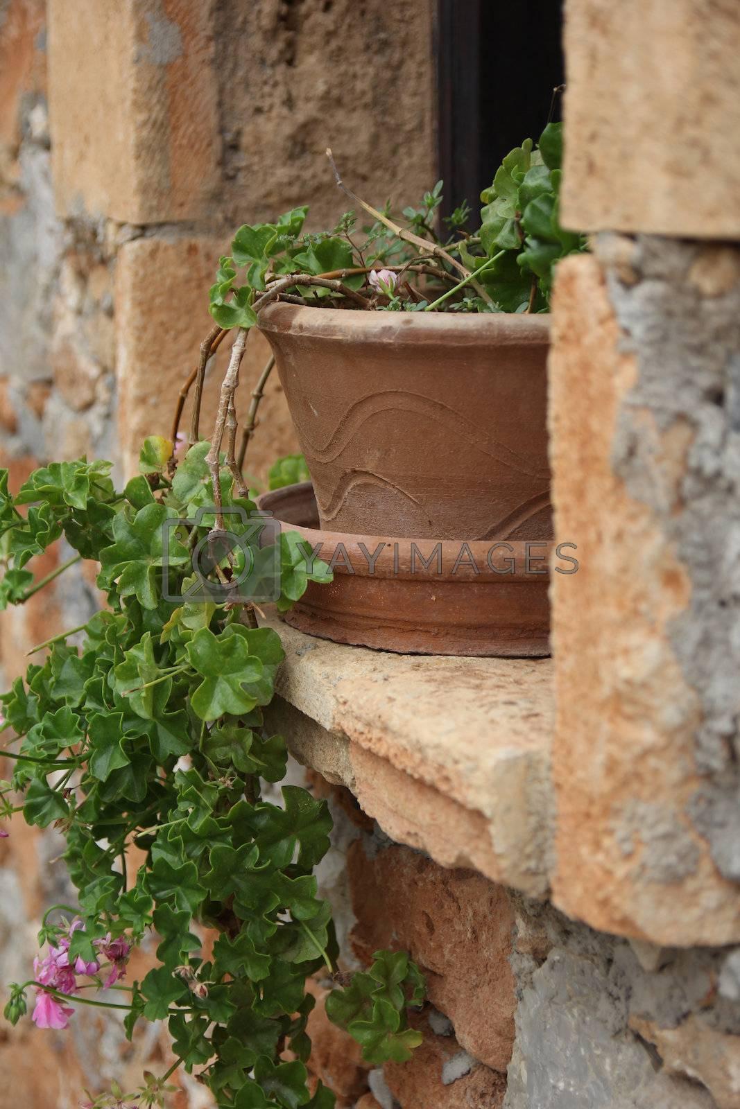 geranium in a clay pot on a window sill Greek house