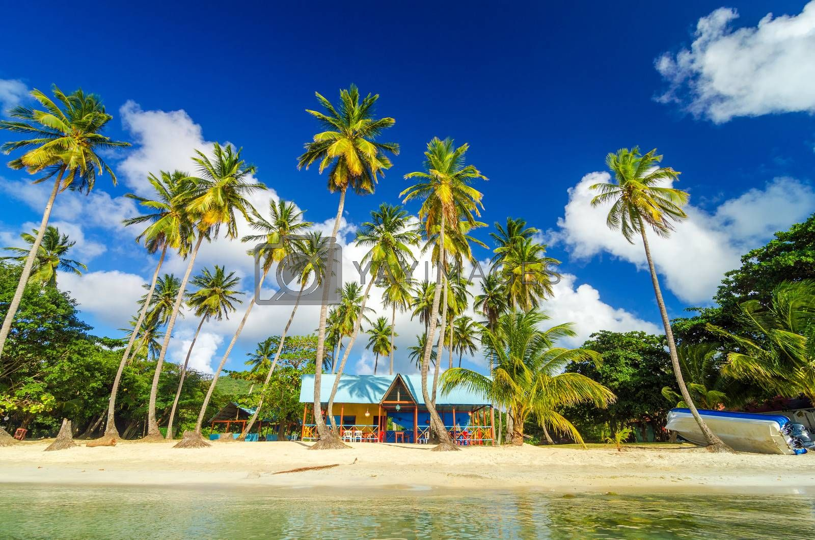 Colorful shack on a beach surrounded by palm trees in San Andres y Providencia, Colombia