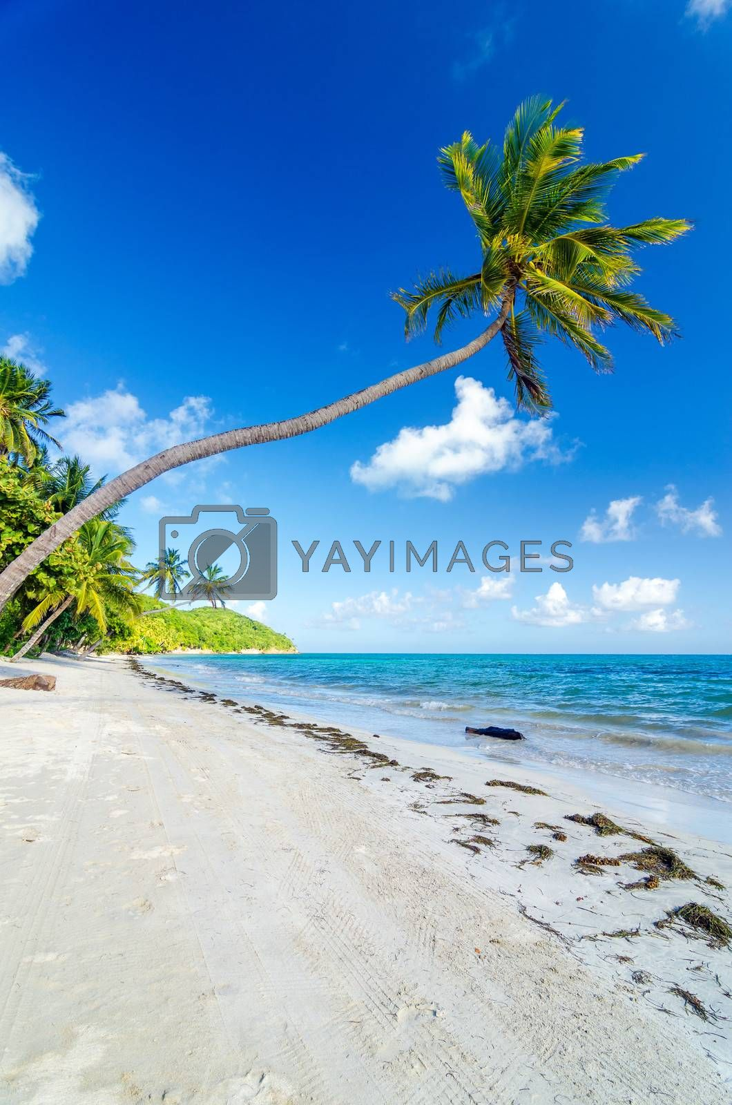 Palm trees on a deserted Caribbean beach in San Andres y Providencia, Colombia