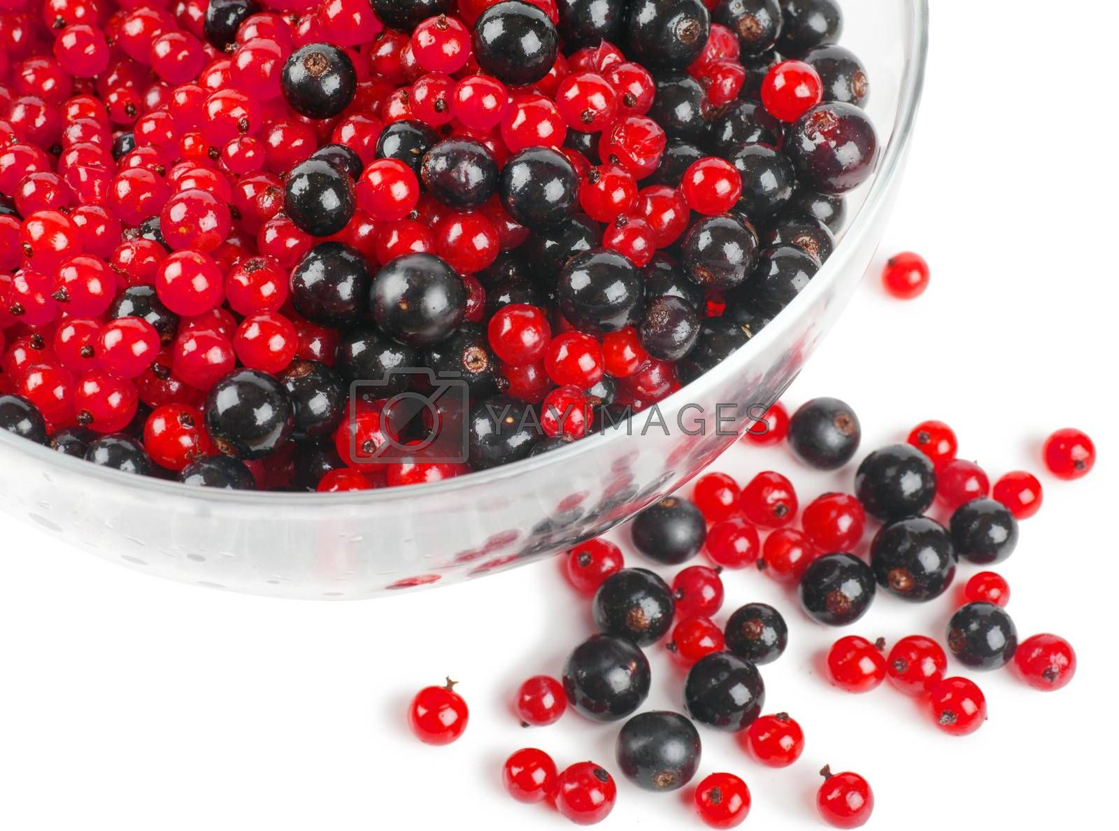 Heap of red and black currants in big bowl