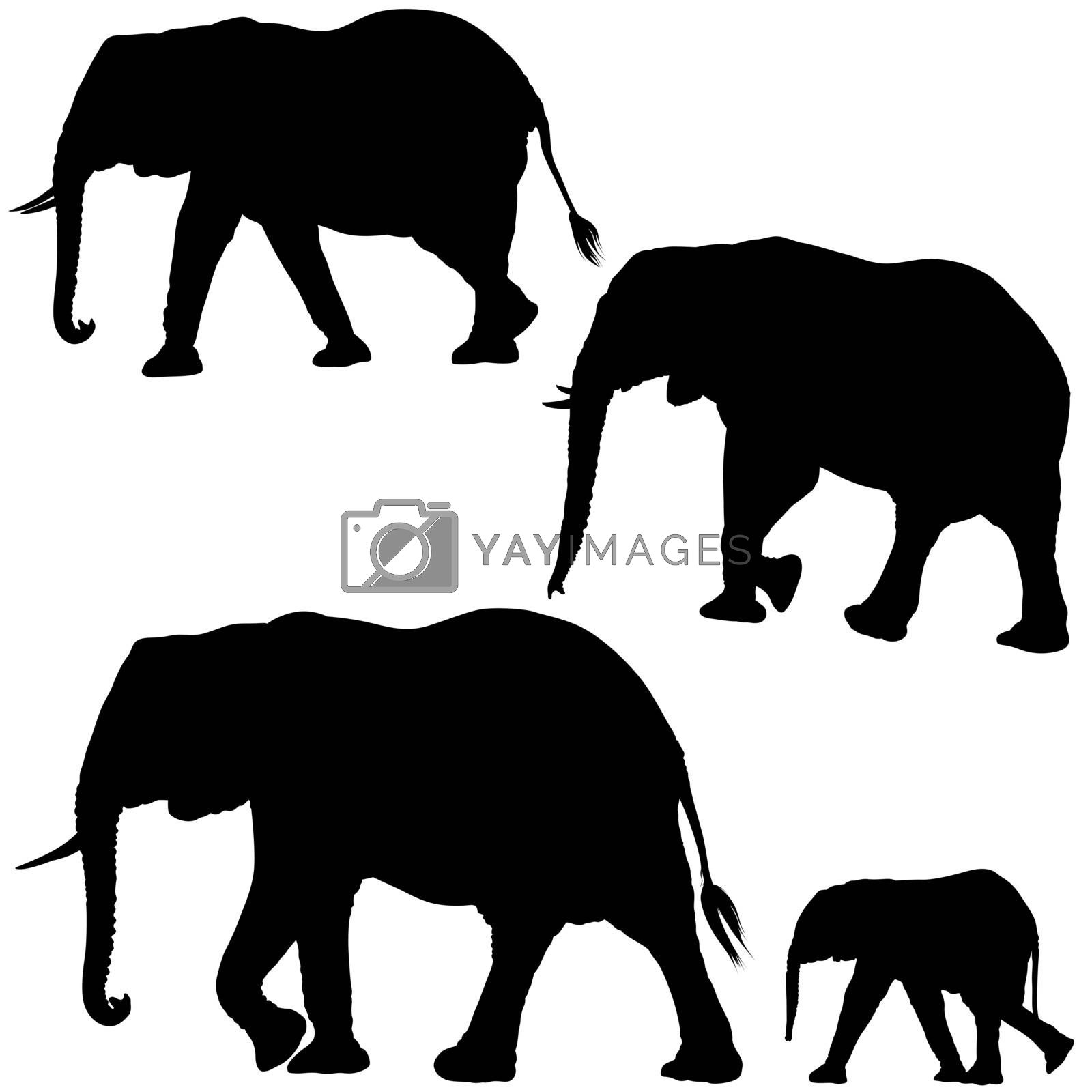 Elephant Collection - Black Silhouettes, Vector