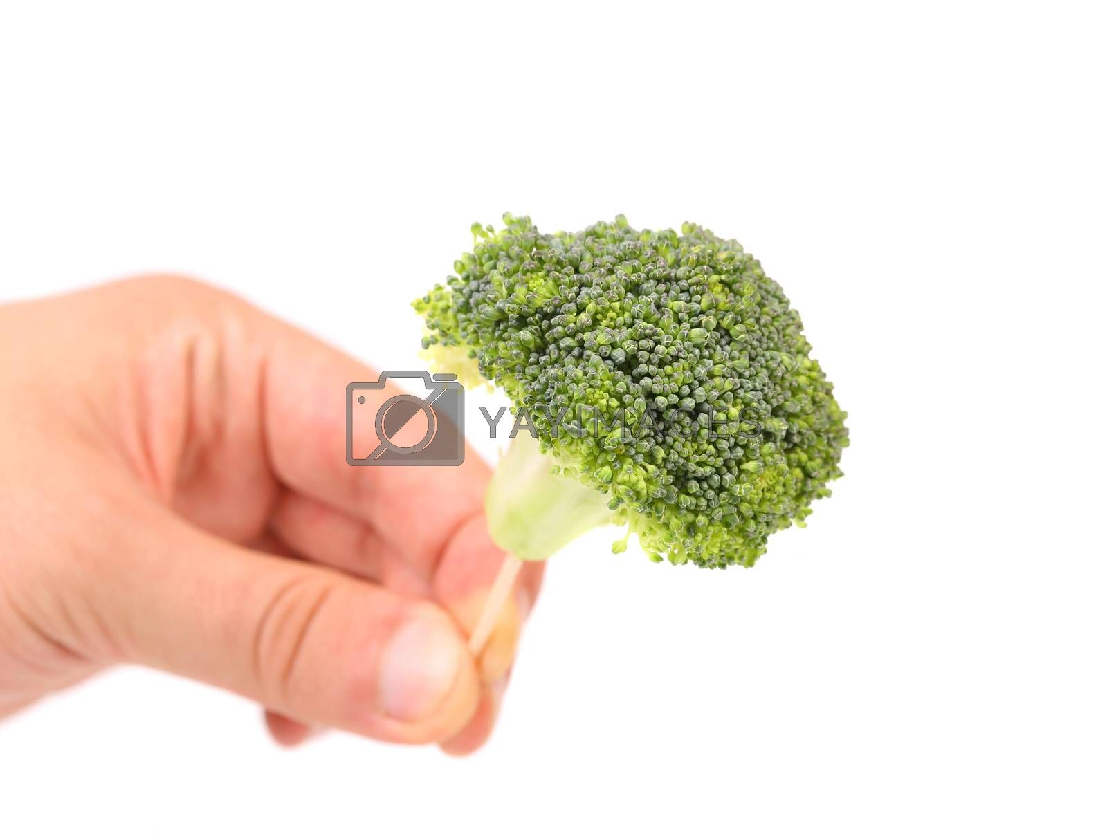 Hand holds broccoli floret on a toothpick. Close up.