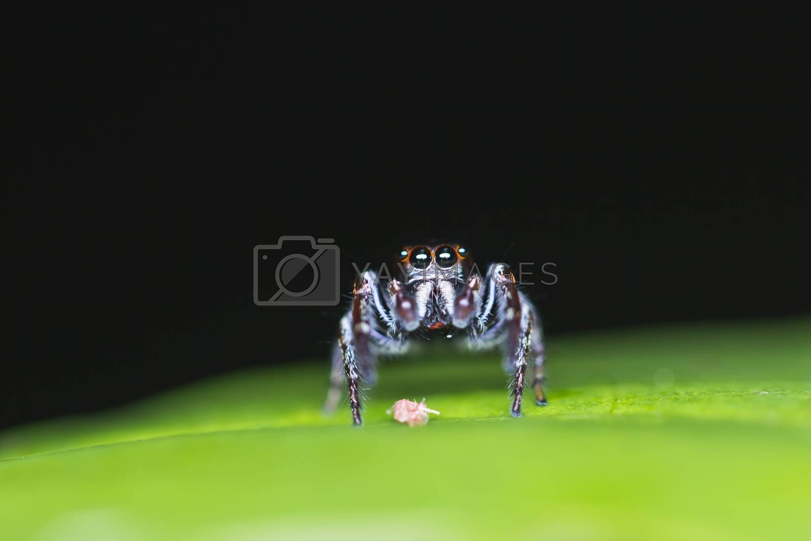 Spider, insect going to eat insect in life cycle of them