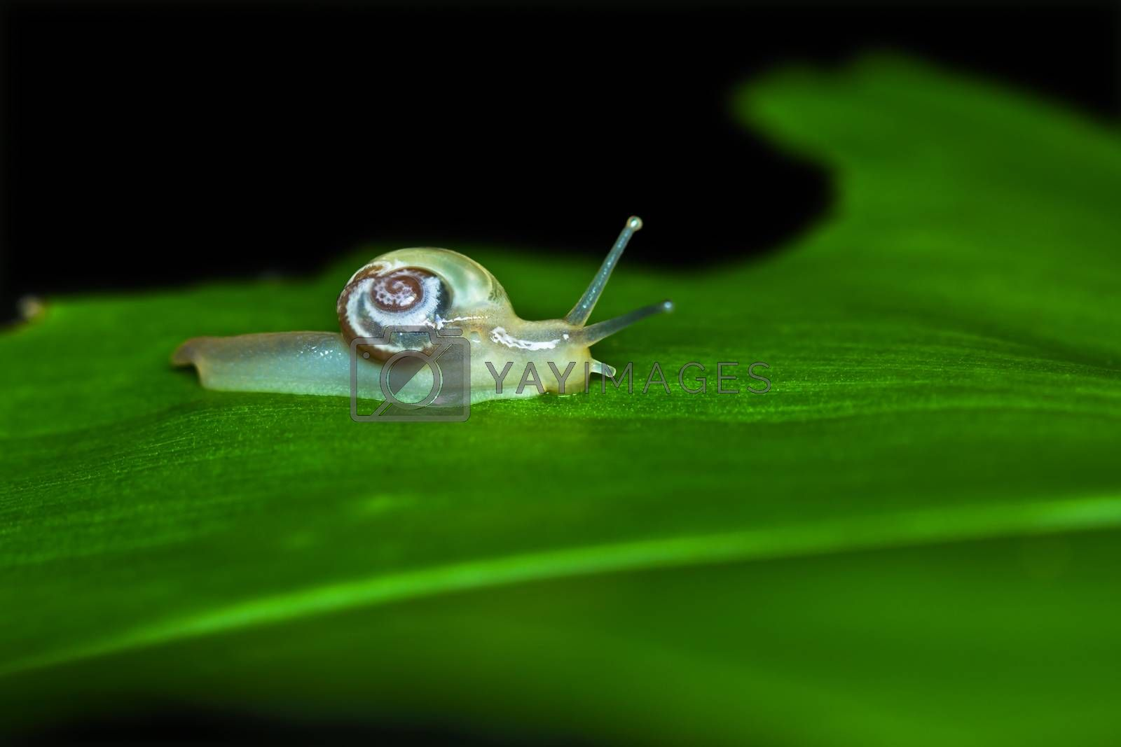 Small brown snail on a green leaf tree