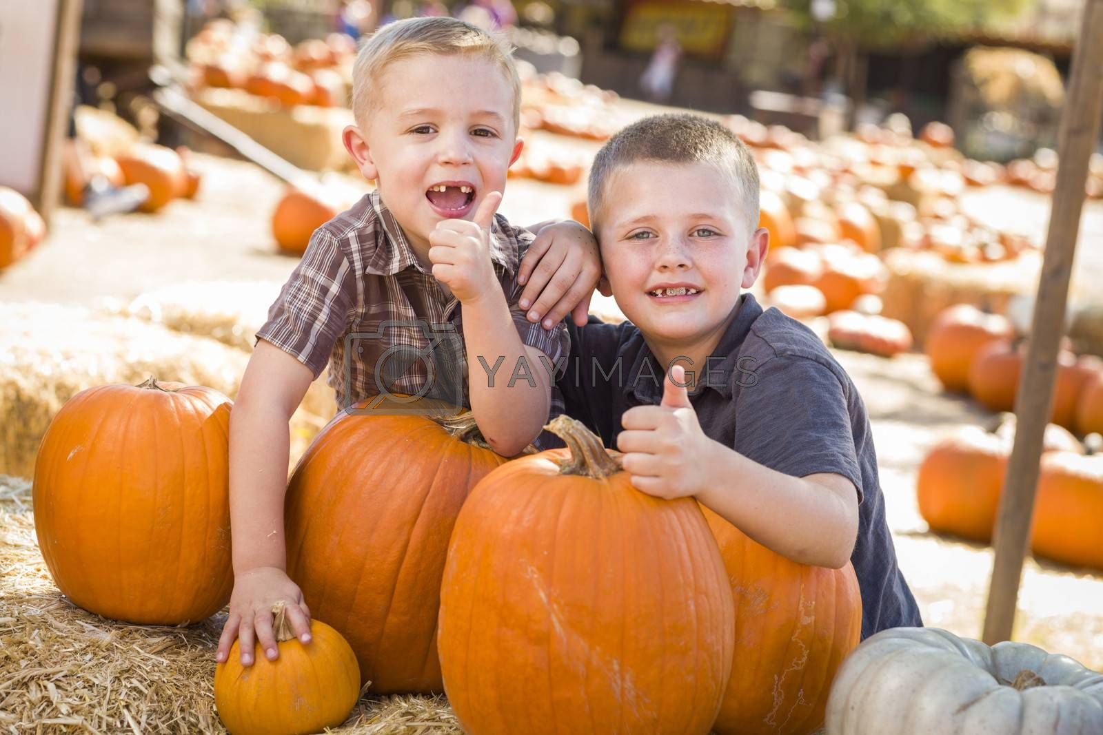 Two Boys at the Pumpkin Patch with Thumbs Up and Having Fun on a Fall Day.
